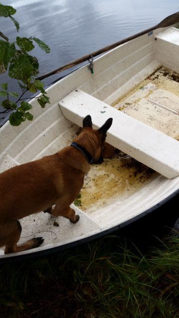 Butz kommer väl ihåg hur han var ute och åkte båt med Tanja så han vill gärna klättra in i båtar...