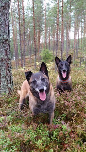 Joy & Enya